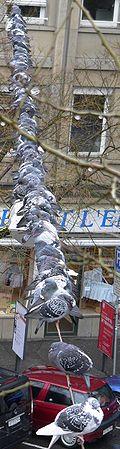 Les colombes de roche, également connues sous le nom de pigeons