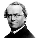 Gregor Mendel, Vater der modernen Genetik.