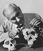 Louis Leakey esamina i teschi di Olduvai Gorge, Tanzania