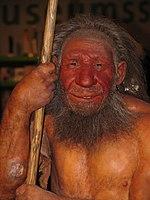 Deze reconstructie is in het Neanderthal Museum