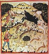 Wildschweinjagd, tacuinum sanitatis casanatensis (XIV. Jahrhundert)