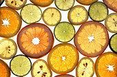 As frutas cítricas são hesperidiums