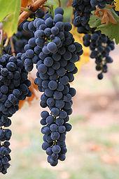 Mensen kunnen de druiven eerst hebben gefermenteerd in dierlijke huidzakken om zo wijn te maken tijdens het Paleolithicum.