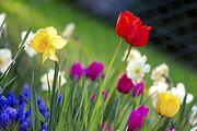 Frühlingsblüten im April in der nördlichen Hemisphäre.