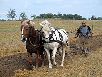 Konie ciągnące pług