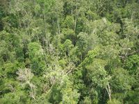 Veenmoerasbos in Kalimantan