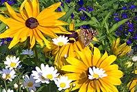 Ein Schmetterling und eine Biene mit drei Arten von Blumen