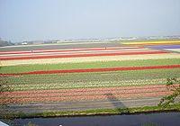 Pæremarker i Lisse