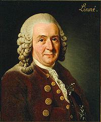 Carolus Linnaeus door Alexander Roslin, 1775