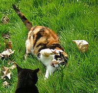 De kat aan de rechterkant is de kat aan de linkerkant zat en dit is een halfslachtige waarschuwing.