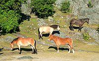 Grupa koni