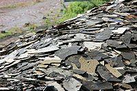 Fragmentos de xisto do poço fóssil Grube Messel
