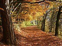 De herfst (Fall) begint op het noordelijk halfrond in september, meestal op 23 september.