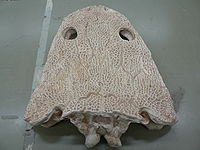 Flacher Schädel eines typischen frühen Amphibiums, Metopsaurus.