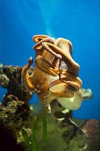 Een octopus die een container met een schroefdop opent