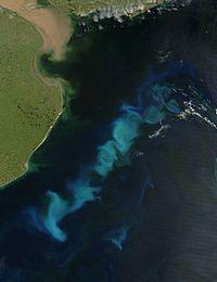 Phytoplanktonblüte im Südatlantik vor Argentinien