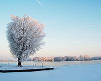 Sneeuw in januari op het noordelijk halfrond, waar het een wintermaand is.
