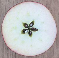 Het gynoecium van een appel heeft vijf carpels
