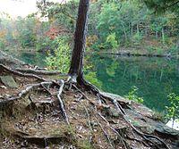 Baumwurzeln verankern die Struktur und liefern Wasser und Nährstoffe. Der Boden um die Wurzeln dieser jungen Kiefer ist erodiert.
