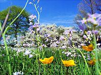 Bloemen en Bomen in volle bloei op het Noordelijk halfrond, waar mei in de late lente valt.