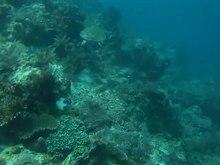Odtwarzanie mediów Pływanie żółwia morskiego