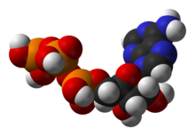 Struktur von Adenosintriphosphat (ATP), einem zentralen Zwischenprodukt des Energiestoffwechsels