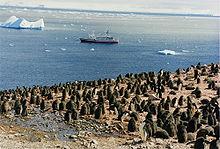 Adelie-Pinguinküken in der Antarktis, mit MS Explorer und einem Eisberg im Hintergrund.