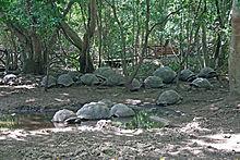Izolovaná populace žije na ostrově Changuu na Zanzibaru.