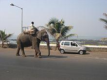 Ein Mann aus Bombay reitet auf einem Elefanten.