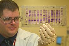 Ein Chemiker der U.S. Customs and Border Protection liest ein DNA-Profil, um herauszufinden, woher eine Ware stammt.