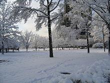 Park pokryty śniegiem w okresie zimowym