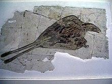 Confuciusornis , kredowy ptak z Chin