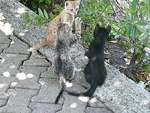 Kittens die opgroeien
