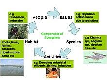Ein Beispiel für ein Ökosystem