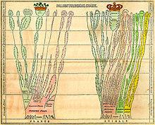 """Rozkładana karta paleontologiczna Edwarda Hitchcocka w """"Elementary Geology"""" (1840)"""