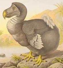 Der Dodo: ein flugunfähiger Vogel aus Mauritius, der im 17. Jahrhundert ausstarb.