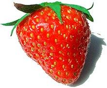"""Um fruto de morango: as """"sementes"""" são cada uma derivada de um pistilo da flor."""