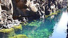 Pływanie w słodkiej wodzie w Puerto Ayora, Galapagos na wyspie Santa Cruz.
