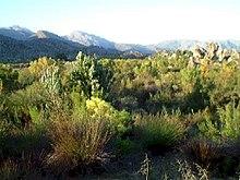 Fynbos, ekozon unikalny dla RPA, w pobliżu Kapsztadu