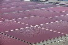 Verdunstungsteiche in der Camargue (Südfrankreich): Wenn das gesamte Wasser im Salzwasser verdunstet, bleibt das Salz zurück.
