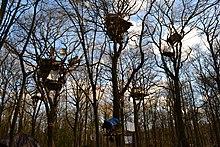 Boomhutten om te protesteren tegen het kappen van een deel van het Hambachwoud voor de Hambachmijn in Duitsland: daarna werd de kap in 2018 stopgezet.