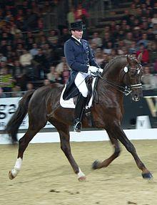 Ein Pferd, das von einem Mann in einer Dressurprüfung geritten wird