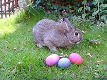 Jajka wielkanocne i zwykły króliczek