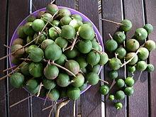 Macadamia-moer