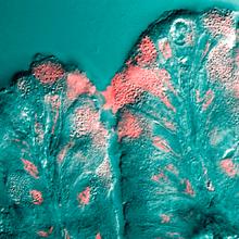 Komórki śluzowe.