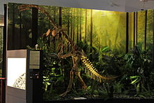 Plateosaurus tentoonstelling