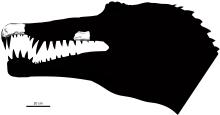 Schema met de bekende schedel fossielen op hun plaats