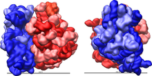 Rysunek 2: Duża (czerwona) i mała (niebieska) podjednostka pasują do siebie