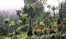 Planten in Ruwenzori Park, Uganda.
