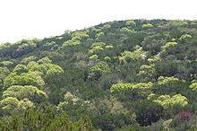 Laubmischwald im Frühling